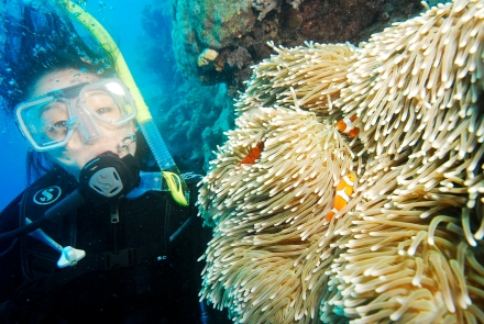 Finding Nemo Great Barrier Reef