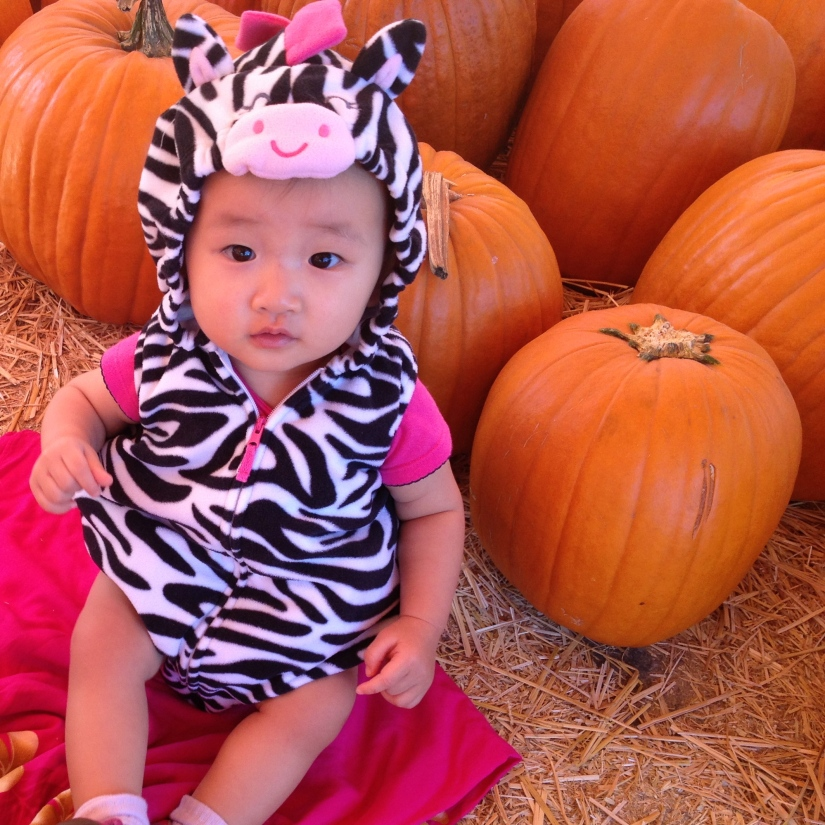 Halloween Zebra Costume Pumpkin Patch
