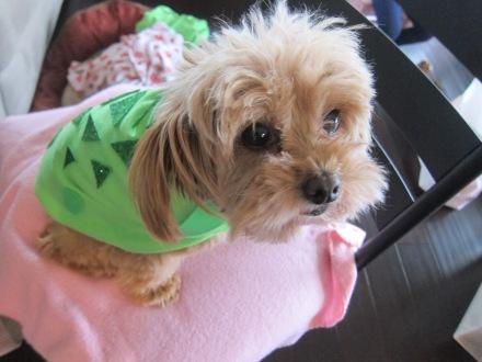 Halloween Dog Turtle Costume