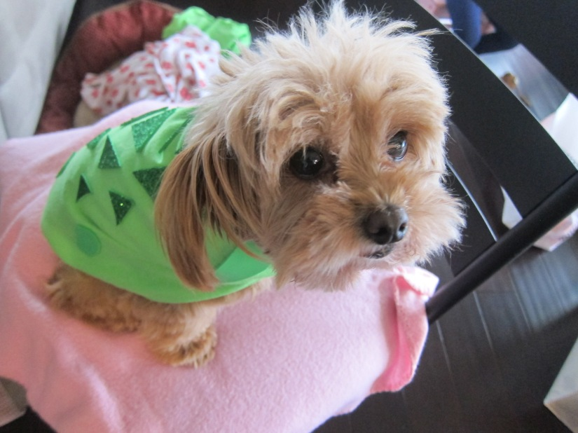 Halloween Dog Turtle Costume